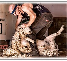 Sheep shearing by Phoxford