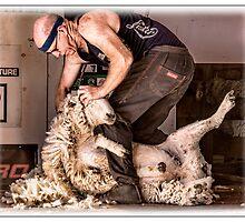 Sheep shearing by Phoxford