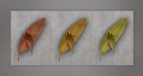 Autumn trio by Jan Pudney