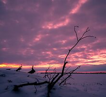 Winter Prairie Dawn 1380_2013 by Ian McGregor