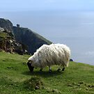 Sheep Grazing on Slieve League, Ireland by Ludwig Wagner