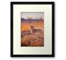 The Hunter Framed Print