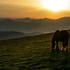 A nice spot to graze, Monte Subasio, Umbria, Italy by Andrew Jones