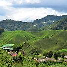 Tea Plantation by nurulazila