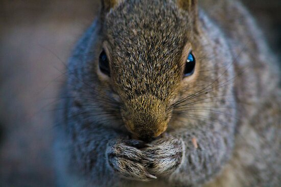 Central Park, Squirrel by Jasper Smits