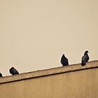 New York City, Pigeons by Jasper Smits