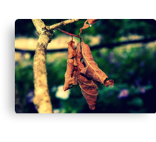 Autumn, hello.  Canvas Print