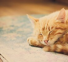 Little Red Kitten Sleeping On Bed by GrishkaBruev