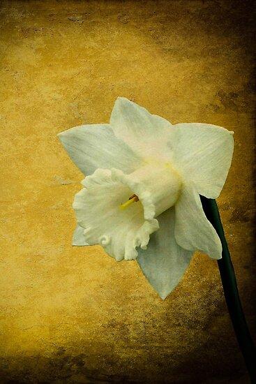 Pure as springtime by missmoneypenny