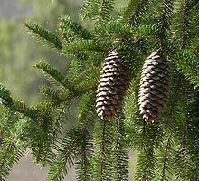 pine cones by patrizia63