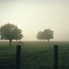 Misty Morning by Bruiserstang