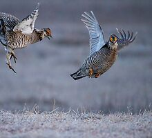 Fighting Prairie Chickens by Thomas Young