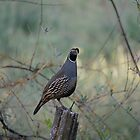 Quail on a Post by AmishElectricCo