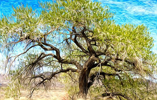 Old Cottonwood by Dianne Phelps