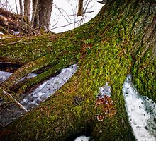 Tree Trunk on Ice by Nazareth