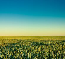 Green Barley Ears by GrishkaBruev