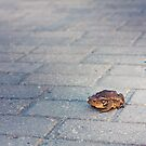 Toad On Gray Tiled Floor by GrishkaBruev