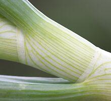 spring onion de Cucuron by yvesrossetti