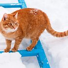 Red cat walking in the snow by GrishkaBruev