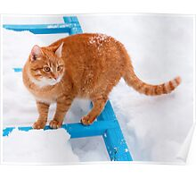 Red cat walking in the snow Poster