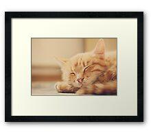 Little Red Kitten Sleeping On Bed Framed Print
