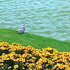 Bird in the park by Annabellerockz