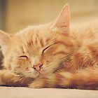 Little Red Kitten Sleeping by GrishkaBruev