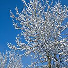 Snow Covered Tree by mlphoto