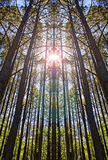 Cathedral of the Pines by Otto Danby II
