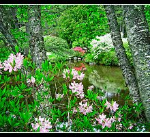 Asticou Azalea Garden Northeast Harbor Maine by Edward Fielding