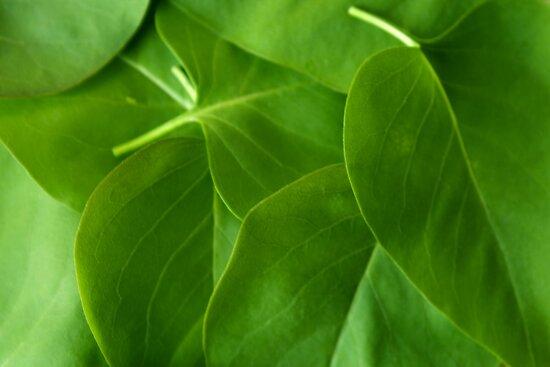 leaves by slavikostadinov