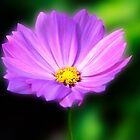Dramatic Purple Daisy by daphsam