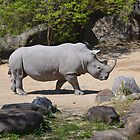 Southern White Rhinoceros by JMG1883