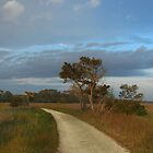 Walk Through Salt Marshes by JHRphotoART