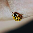 Bug on my Hand by saseoche