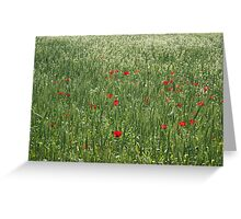 Poppy Field And Springtime Hay Meadow Greeting Card