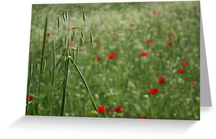 A Beautiful Blur of Poppies and Seed Head by taiche