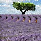 Lavender Field by martibartosova