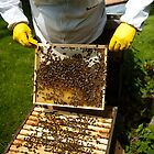 Bee Keeping in England by mlphoto