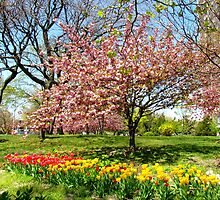 Spring in New York City  by Alberto  DeJesus