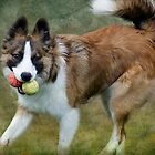 Bryn two balls by hampshirelady