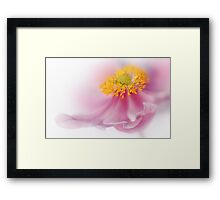 Soft pink Framed Print
