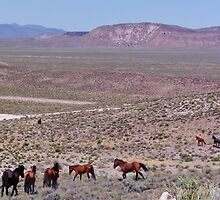 Mustang Territory by marilyn diaz