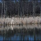 Reflections Of Serenity by jodi payne