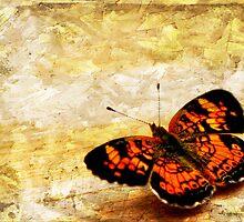 Just a Flutterby.... by Ginger  Barritt