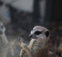 High Five by Stuart Daddow Photography