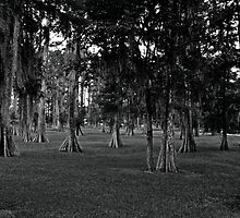 Black and White Cypress by jasmith162