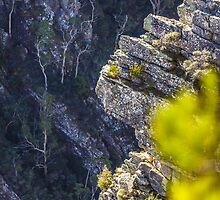 Tulampanga/Alum Cliffs, Mole Creek, Tasmania, Australia by fotosic