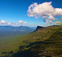 Border Ranges NP NSW by sarcalder