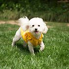 Cute White Doggy Running.  by sallyrose1